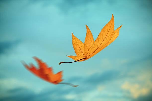 есен време листа