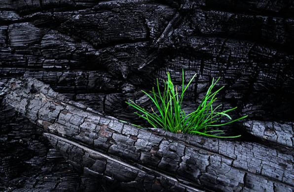 Активен въглен, трева
