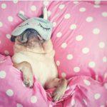маска за сън, ползи, куче