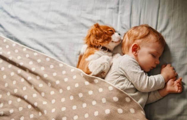 baby, dog, sleep
