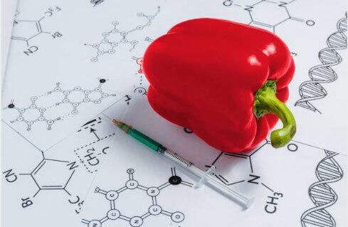 gmo pepper