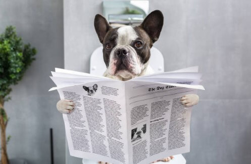 dog, newspaper, toilet