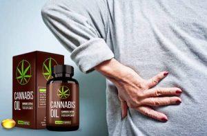 cannabis oil capsules usage,dosage, contraindications