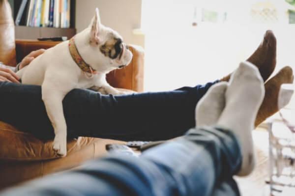legs up, dog