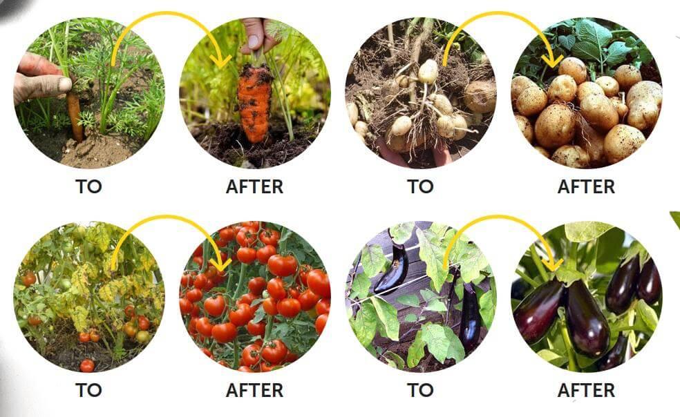 vegetables, gardening, fertilizer, effects