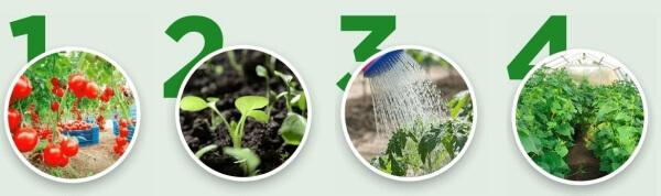vegetables, gardening, fertiliser
