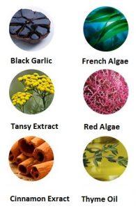 Black Garlic French Algae Red Algae Tansy Cinnamon Thyme