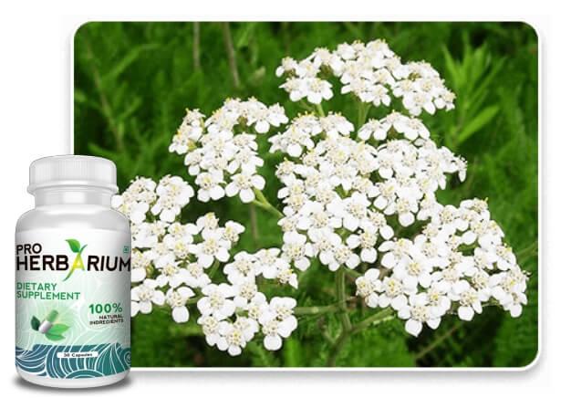 Proherbarium, ingredients