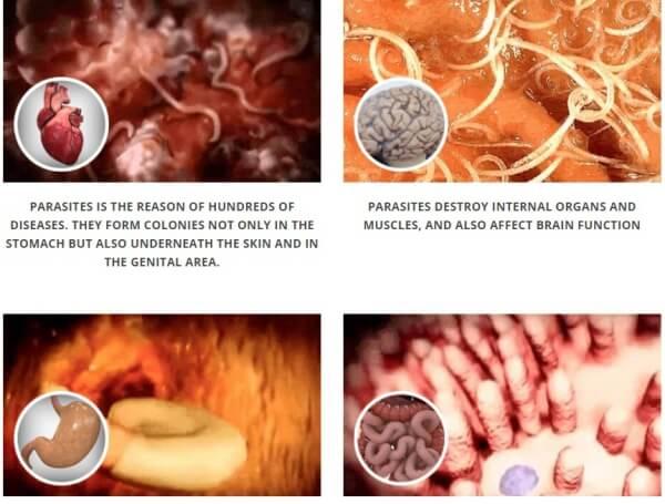 capsules against parasites
