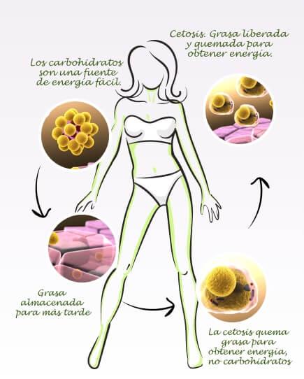 ketonova weight loss drops ingredients