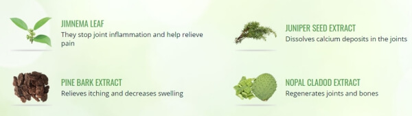 Flexo Samine ingredients